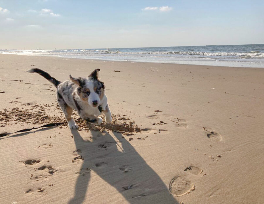 Honden- of luxeleven in Knokke-Heist?